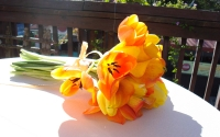 tangerine-tulips-and-callas
