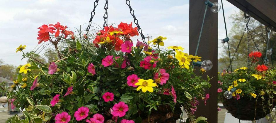 Garden Terrace Flowers